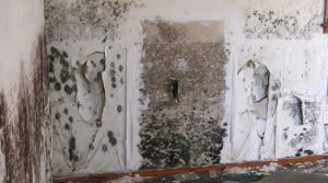 Black mold damage health hazard mold mitigation restoration Alpharetta Georgia
