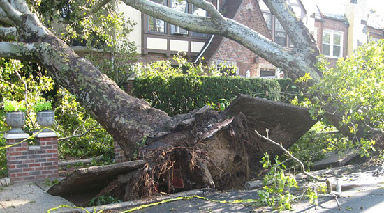 Emergency tree removal damage in Alpharetta Ga