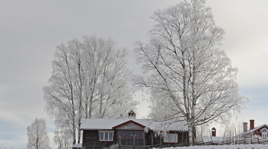 Exterior winter safety tips prune trees