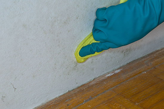 mildew removal service by a certified mildew treatment technician in Alpharetta Ga