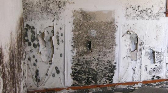 Mold damage health hazard mitigation and restoration